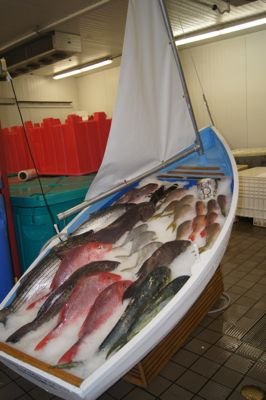 Various types of raw fish over ice in a boat