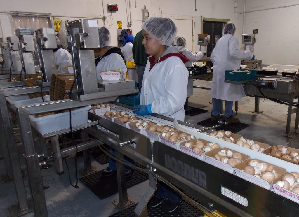 Dorner Conveyors Mushroom Handling and Processing